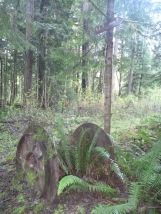 Logging artifacts along the trail